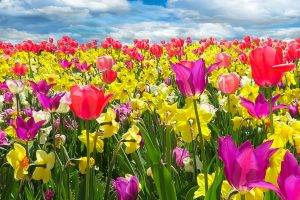 Bright Spring Flowers 1280×853