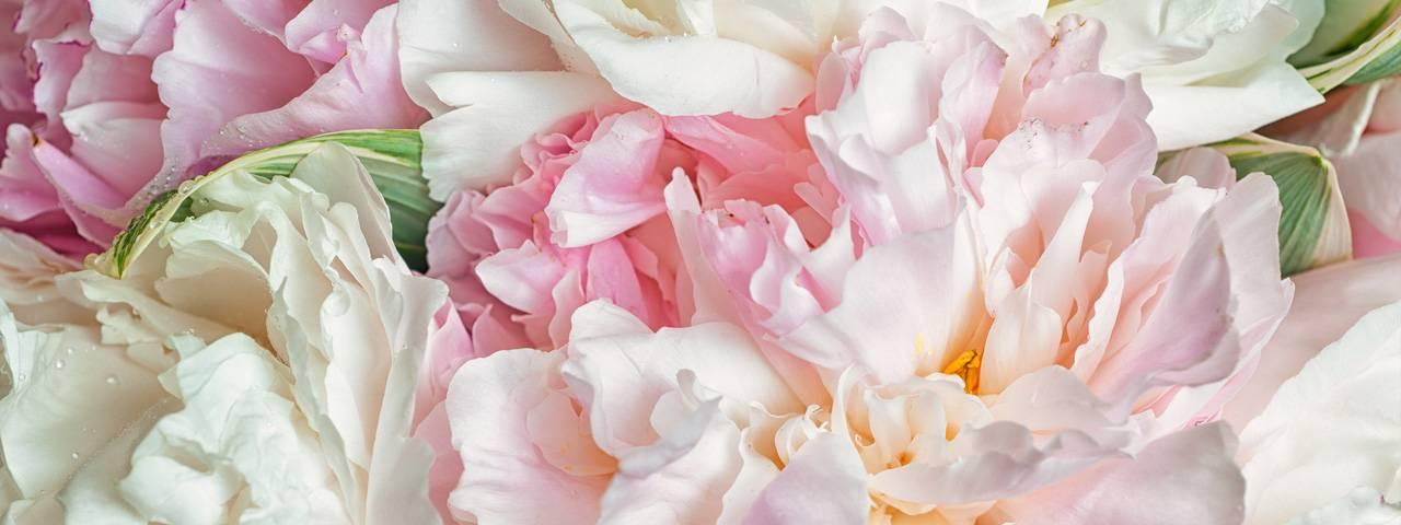 flowers-peonies-1280x480