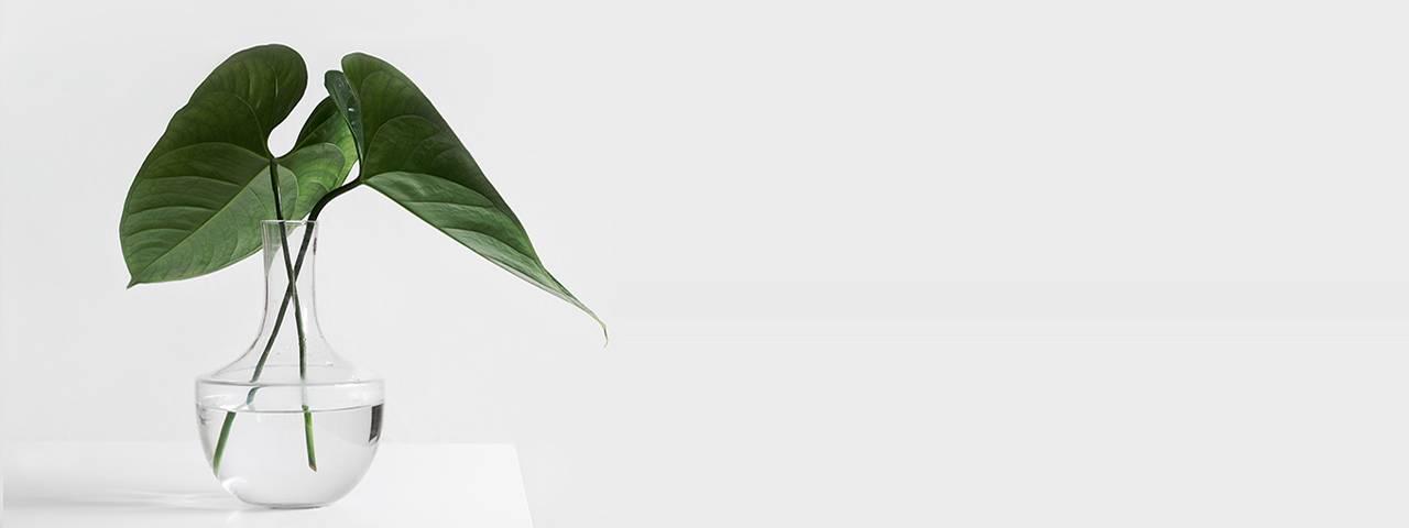 slice_plant_glass_vase