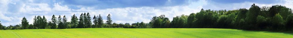 meadow.png