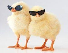 Easter-chicks