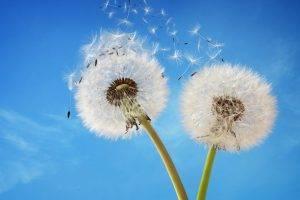 Dandelion Vision Insurance