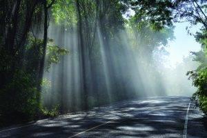 Sunrays, TSO Silsbee, Vision Plan
