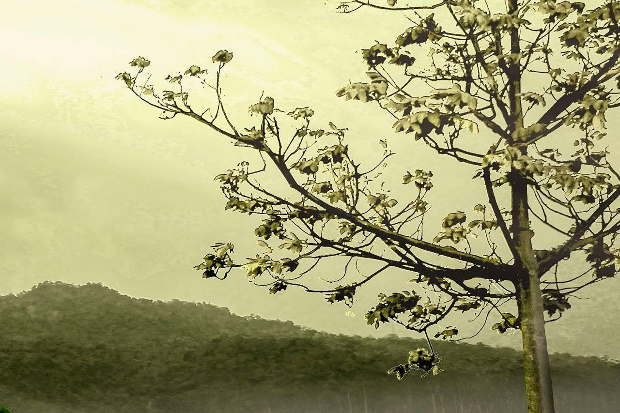 bkground__landscape-tree-green_med