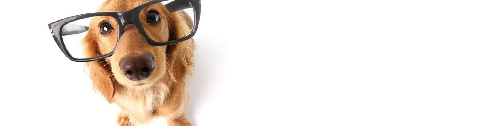 xprescription-eyeglasses-1600x421.jpg.pagespeed.ic_.lEJ9cyZERG