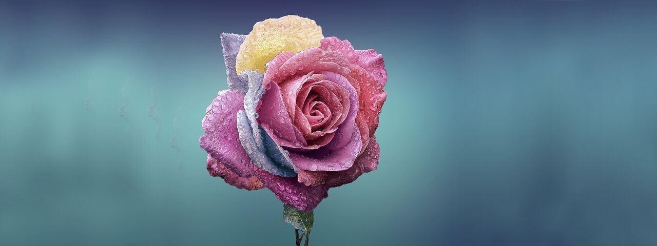 Colorful20Rose20Water20Droplets201280x480_preview1.jpeg