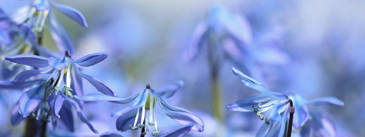 Spring-Mauve-flowers