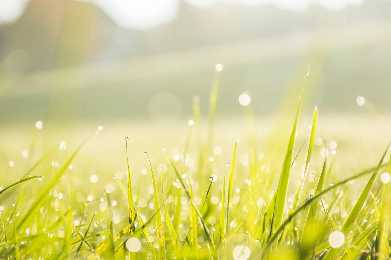 Close-up-grass-1280X853