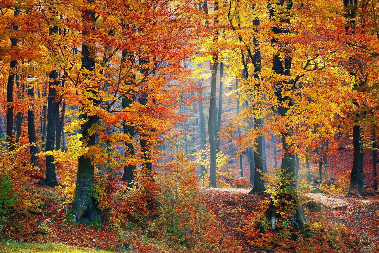 Fall-Trees-Scenery-1280x853