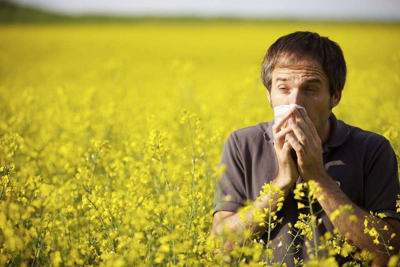 allergy rape seed field male sneeze