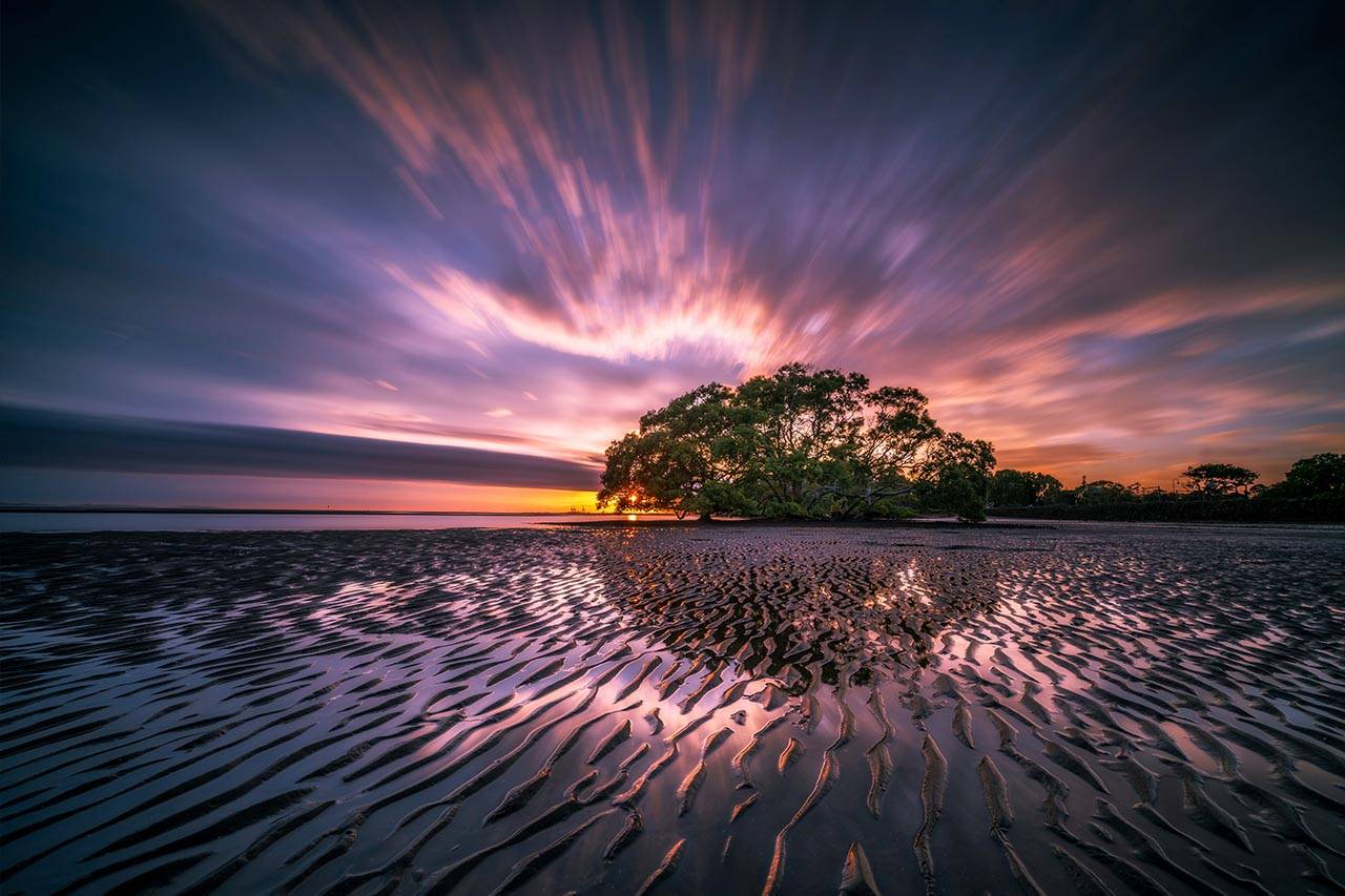 landsape-beauty-tide-sunset-tree