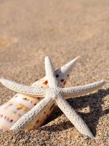starfish with shell