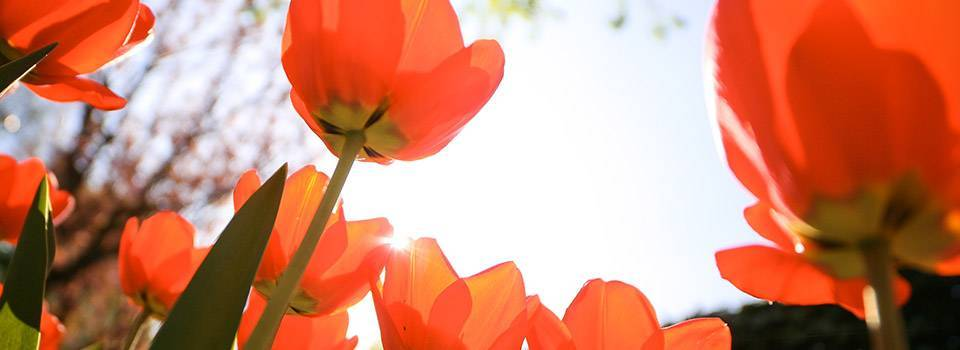 flowers_sunshine_red