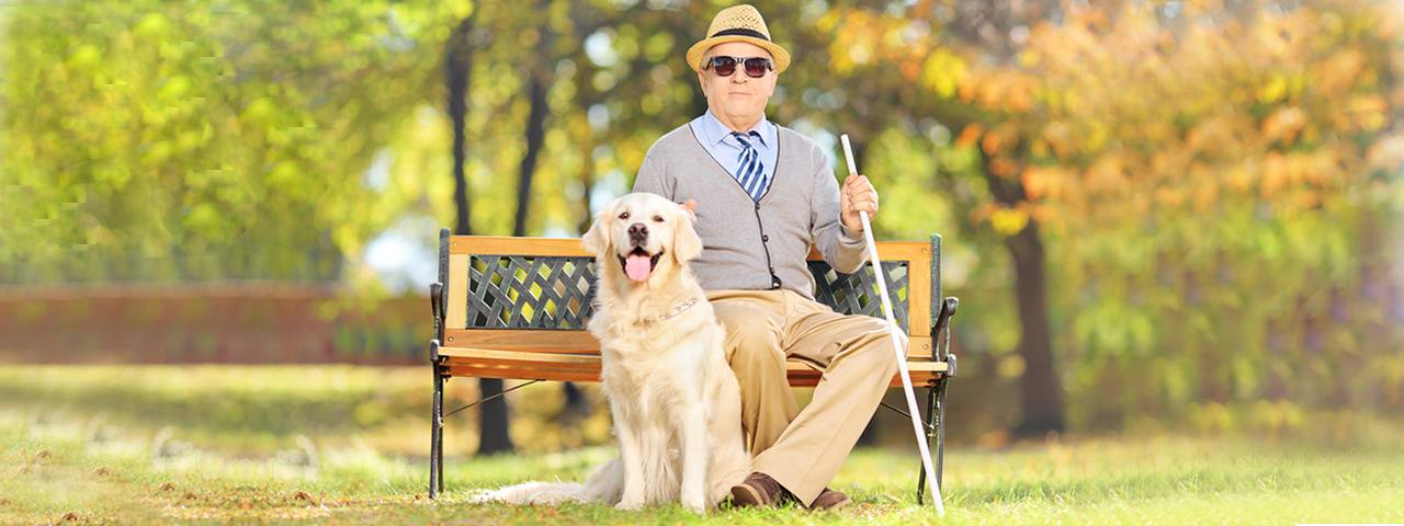 man wearing sunglasses and sitting on bench next to seeing eye dog