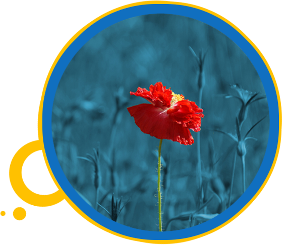 red-poppy_v2.png