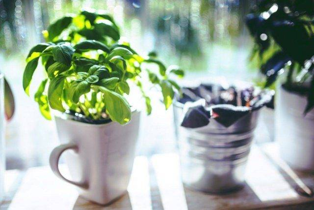 nutrition basil short depth field compressor 640x427