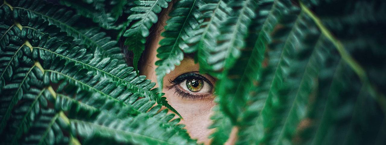 eye peeking from fern 1280x480