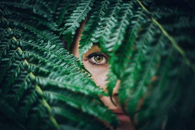 single green eye and leaves