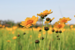 Flowers in field, Vision Insurance, TSO Katy Fry, Eye Doctor, Eye Exam