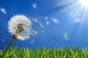 Dandelion, Eye Insurance | Insurance At TSO Beaumont