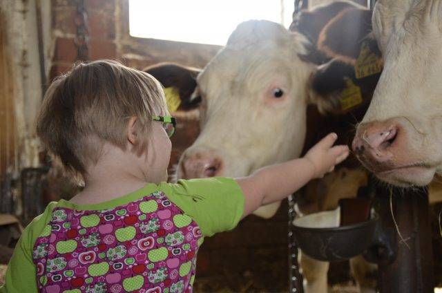special needs child petting cows