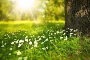 Flowers, Eye Insurance, Tomball