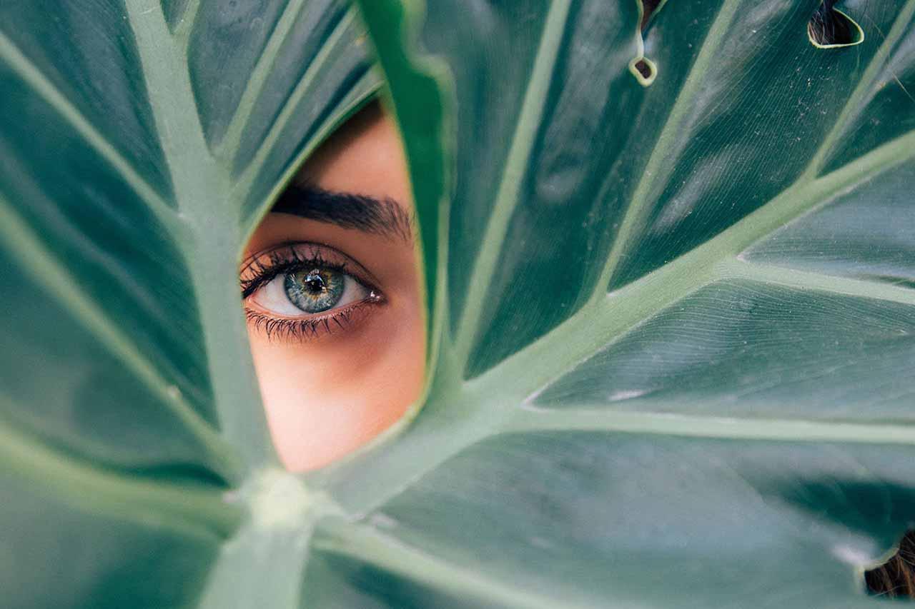 one eye inside leaf