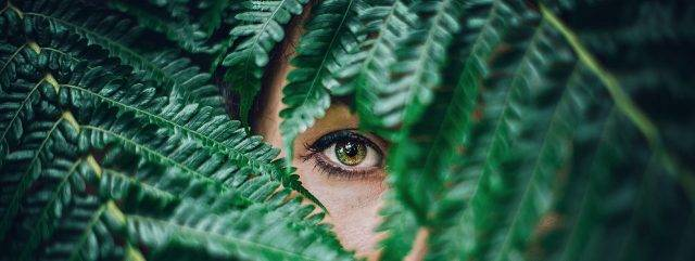 eye peeking from fern_1280x480 640x241