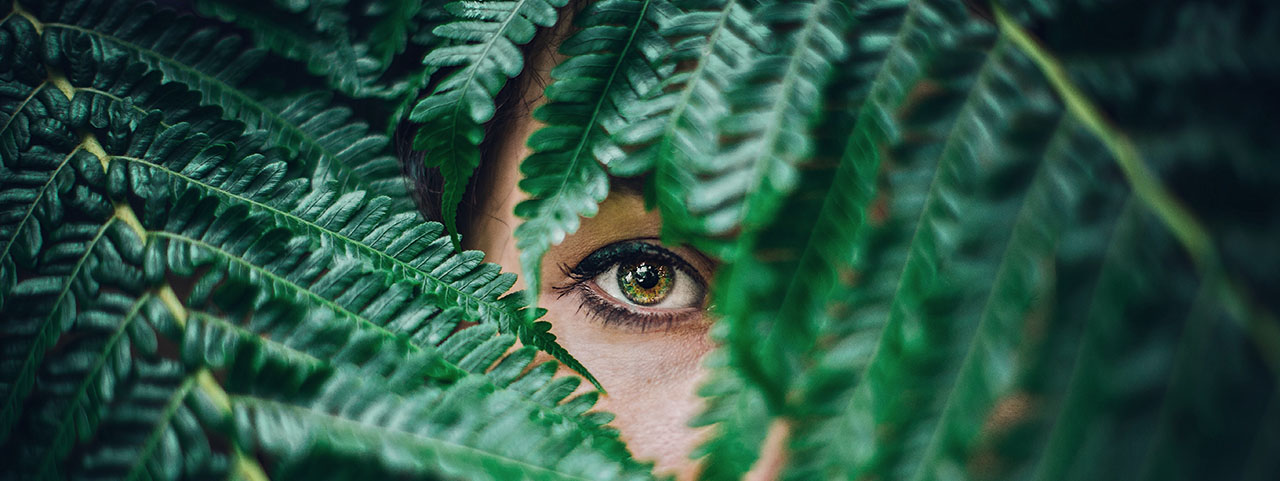 eye-peeking-from-fern_1280x480