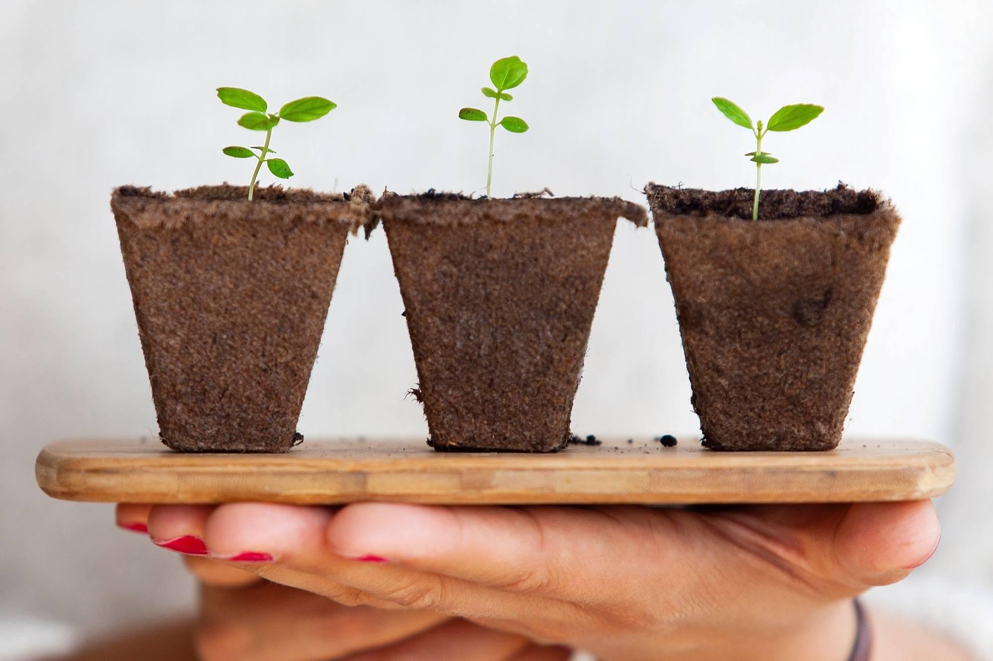 three plants on hand