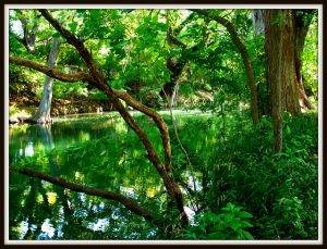 Cypress Creek by Molly258 (Own Work) [Public domain], via Creative Commons – CC BY 2.0.