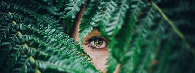 eye peeking from fern_1280x480 640x241