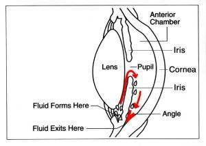 Eye diagram showing fluid exits