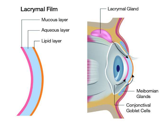Tear film layers