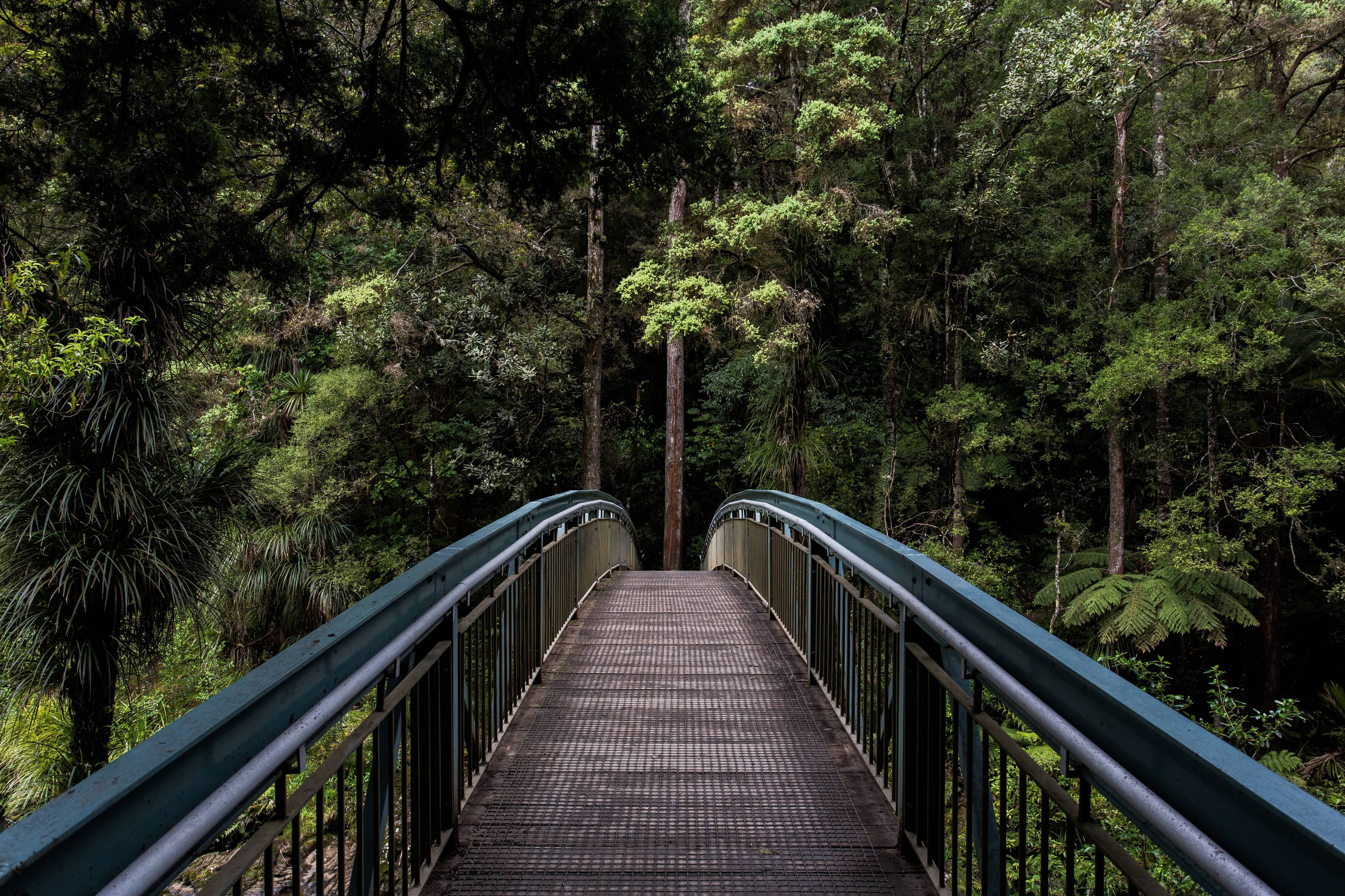 Bridge-and-tree-line