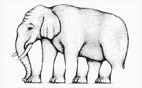 elephant illusion from eye and vision center